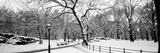 Bare Trees During Winter in a Park, Central Park, Manhattan, New York City, New York State, USA Fotodruck
