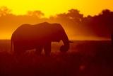 Bull Elephant, Moremi Game Reserve, Botswana Fotografisk tryk af Paul Souders