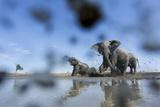 Bull Elephants, Chobe National Park, Botswana Photographie par Paul Souders