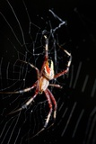 Spider, Kirindy Forest Reserve, Madagascar Photographic Print by Paul Souders