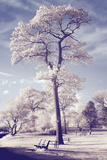 Infrared Park Scene, New Haven Photographic Print by Vincent James