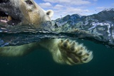 Underwater Polar Bear, Hudson Bay, Nunavut, Canada Photographic Print by Paul Souders