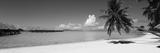 Palm Tree on the Beach, Moana Beach, Bora Bora, Tahiti, French Polynesia Fotografisk trykk
