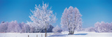 Winter Scenic Germany Photographic Print