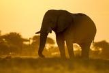 Elephant at Water Hole, Nxai Pan National Park, Botswana Photographic Print by Paul Souders