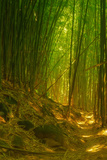 Light and Bamboo Forest, Road to Hana, Maui Photographic Print by Vincent James