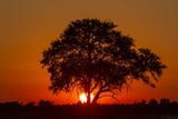 Sunset, Savuti Marsh, Chobe National Park, Botswana Photographic Print by Paul Souders