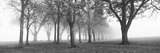 Trees in a Park During Fog, Wandsworth Park, Putney, London, England Reproduction photographique