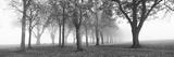 Trees in a Park During Fog, Wandsworth Park, Putney, London, England Fotografisk trykk