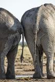 Elephant at Water Hole, Nxai Pan National Park, Botswana Fotografie-Druck von Paul Souders