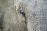 Elephant, Sabi Sabi Reserve, South Africa Photographic Print by Paul Souders