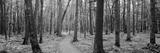 Usa, Michigan, Black River National Forest, Walkway Running Through a Forest Fotografisk trykk