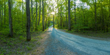 Dirt Road Passing Through a Forest, Great Smoky Mountains National Park, Blount County Photographic Print
