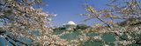 Cherry Blossom with Memorial in the Background, Jefferson Memorial, Tidal Basin, Washington Dc, USA Photographic Print