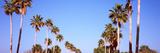 Low Angle View of Palm Trees, Fort De Soto Par, Gulf Coast, Florida, USA Photographic Print