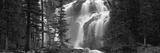 Waterfall in a Forest, Banff, Alberta, Canada Fotografisk trykk