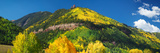 Aspen Trees on Mountain, Needle Rock, Gold Hill, Uncompahgre National Forest, Telluride Photographic Print