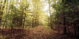 Trail Through the Forest of the Catskills in Kaaterskill Falls, New York State, USA Photographic Print