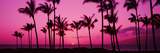 Silhouette of Palm Trees at Dusk, Hawaii, USA Photographic Print
