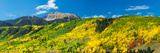 Aspen Trees with Mountain in the Background, Sunshine Peak, Uncompahgre National Forest Photographic Print
