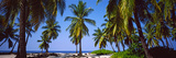 Palm Trees on the Beach, Puuhonua O Honaunau National Historical Park, Hawaii, USA Photographic Print