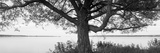 Tree at the Lakeside, Wisconsin, USA Fotodruck