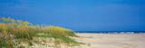 Sea Oat Grass on the Beach, Charleston, South Carolina, USA Fotodruck