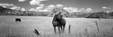 Horses Grazing in a Meadow, Kolob Reservoir, Utah, USA Lámina fotográfica