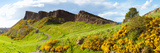 Gorse Bushes Growing on Arthur's Seat, Edinburgh, Scotland Photographic Print