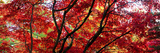Autumn Leaves, Westonbirt Arboretum, Gloucestershire, England Photographic Print
