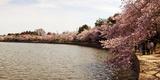 Cherry Blossom Trees at Tidal Basin, Washington Dc, USA Photographic Print