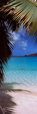 Palm Tree on the Beach, Maho Bay, Virgin Islands National Park, St. John, Us Virgin Islands Photographic Print