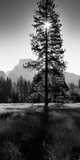 Sun Behind Pine Tree, Half Dome, Yosemite Valley, California, USA Photographic Print