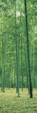 Bamboo Forest Nagaokakyo Kyoto Japan Photographic Print