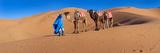 Tuareg Man Leading Camel Train in Desert, Erg Chebbi Dunes, Sahara Desert, Morocco Reprodukcja zdjęcia