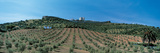 Olive Groves Evora Portugal Photographic Print