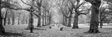 Trees Along a Footpath in a Park, Green Park, London, England Photographic Print
