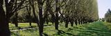 Trees Along a Walkway in a Botanical Garden, Niagara Falls, Ontario, Canada Photographic Print