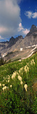 Beargrass (Xerophyllum Tenax) with Mountains in the Background, Us Glacier National Park Photographic Print
