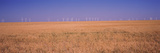 Wind Farm at Panhandle Area, Texas, USA Photographic Print