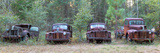 Old Rusty Cars and Trucks on Route 319, Crawfordville, Wakulla County, Florida, USA Lámina fotográfica