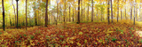 Trees in a Forest, Saint-Bruno, Quebec, Canada Photographic Print