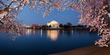 Cherry Blossom Tree with a Memorial in the Background, Jefferson Memorial, Washington Dc, USA Photographic Print by Green Light Collection