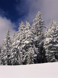 Snow Covered Western Hemlock and Fir Trees on Munson Ridge, Crater Lake National Park, Oregon, USA Photographic Print by Green Light Collection