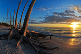 Dead Trees on the Beach at Sunset, Lovers Key State Park, Lee County, Florida, USA Photographic Print by Green Light Collection