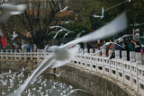 People Feeding the Gulls in a Park, Green Lake Park, Kunming, Yunnan Province, China Photographic Print by Green Light Collection