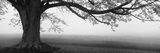 Tree in a Farm, Knox Farm State Park, East Aurora, New York State, USA - Fotografik Baskı