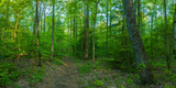 Forest, Great Smoky Mountains National Park, Blount County, Tennessee, USA Photographic Print