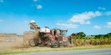 Sugar Cane Being Harvested, Lower Daintree, Queensland, Australia Photographic Print