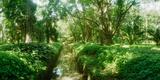 Trees in a Botanical Garden, Jardim Botanico, Zona Sul, Rio De Janeiro, Brazil Photographic Print